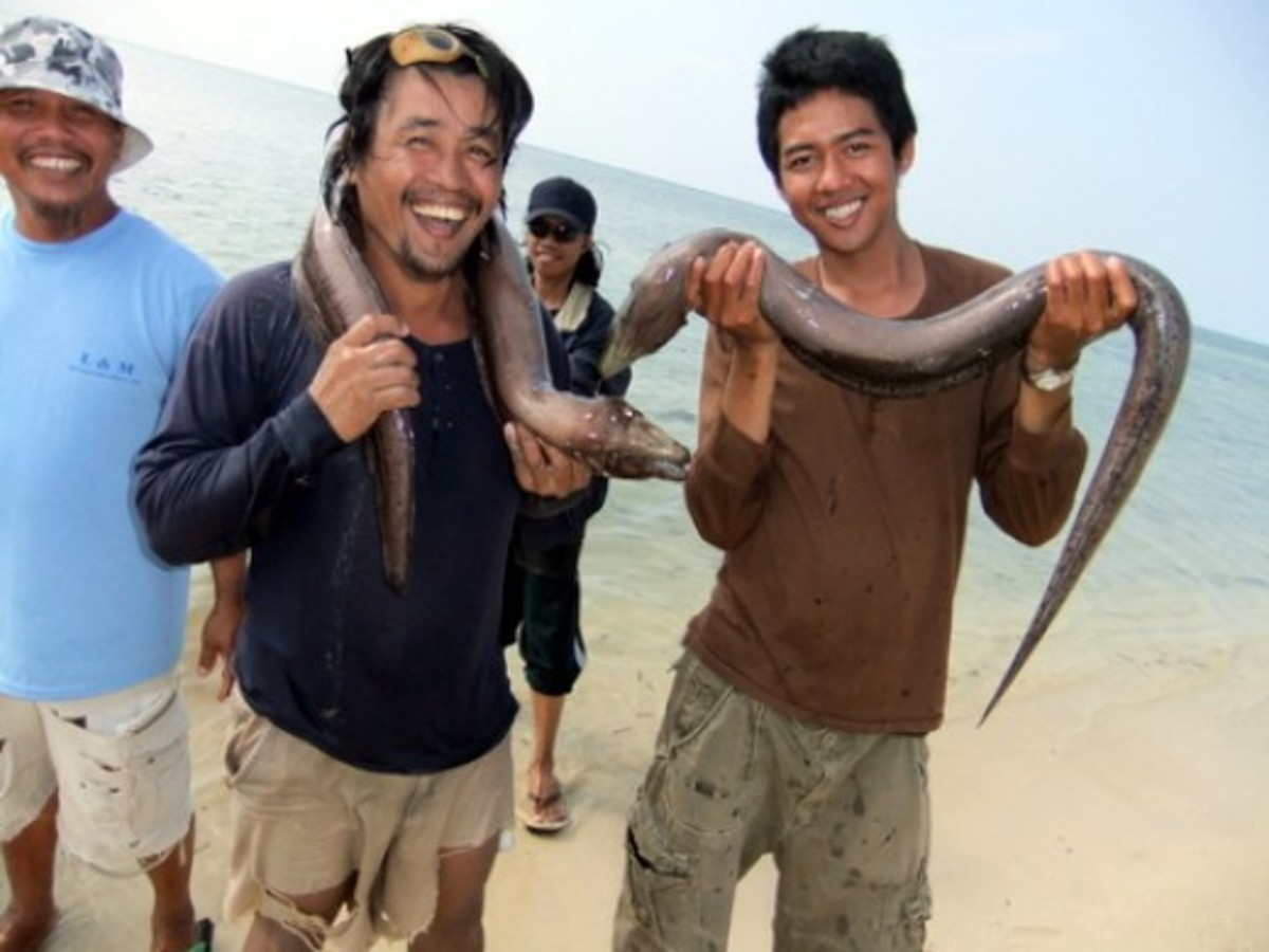 My Filipino staff with their moray eels caught in the Red Sea