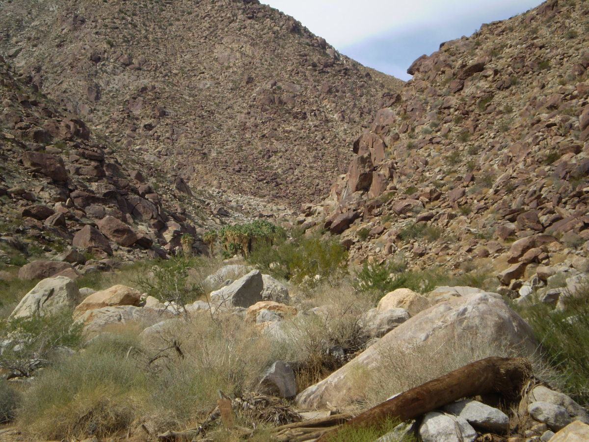 Looking up at the palm oasis along Palm Canyon Trail. Anza-Borrego Desert State Park.