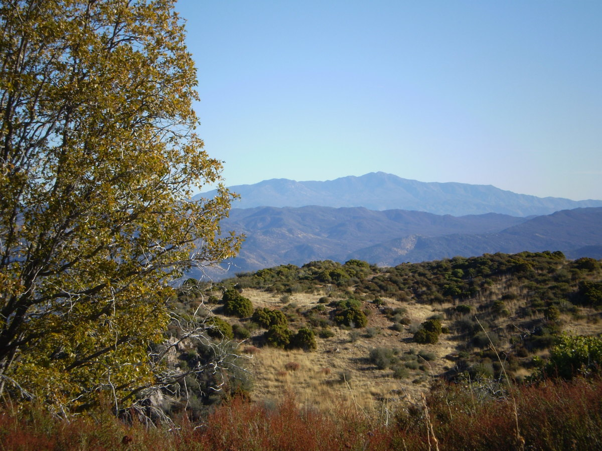Toro Peak from Palomar Mountain.