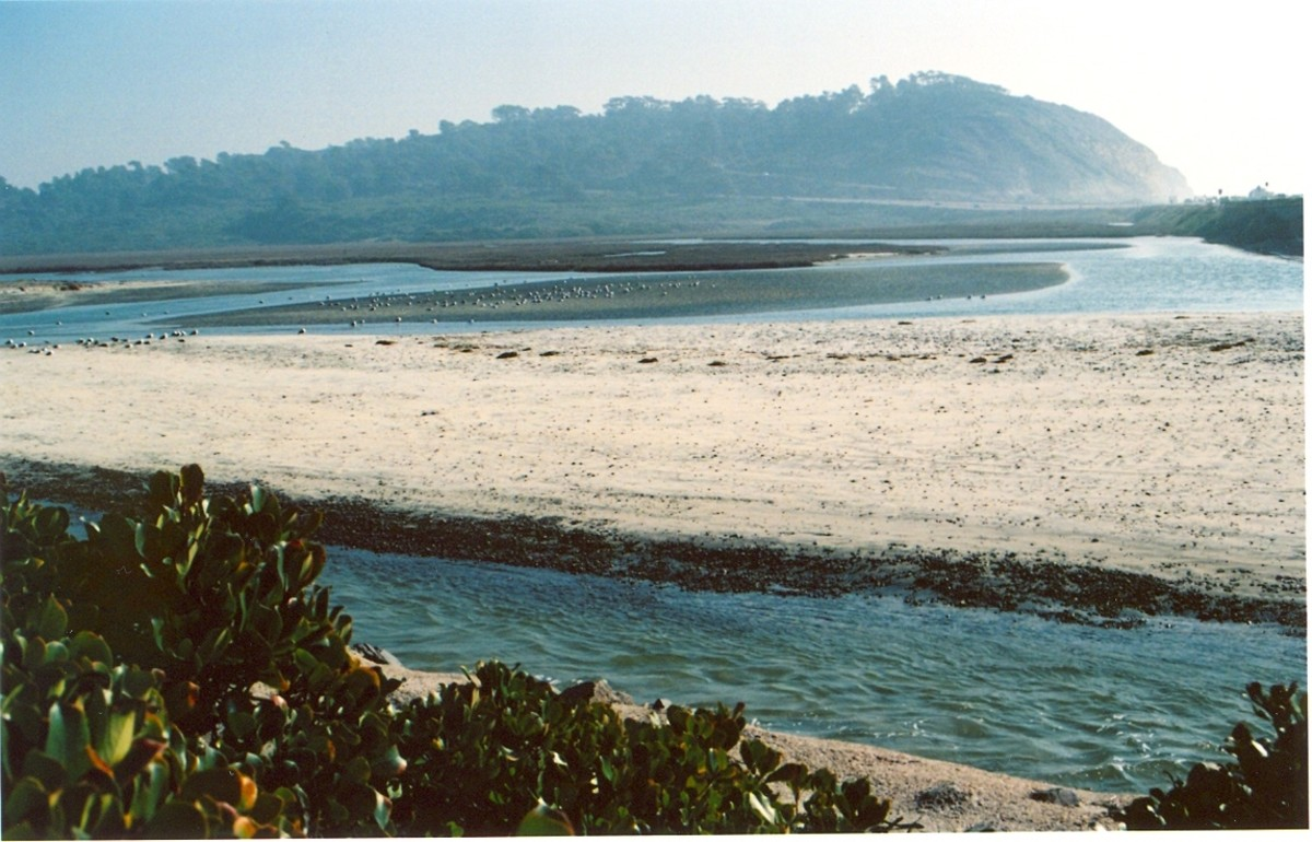 The bluff of Torrey Pines State Reserve from the lagoon.