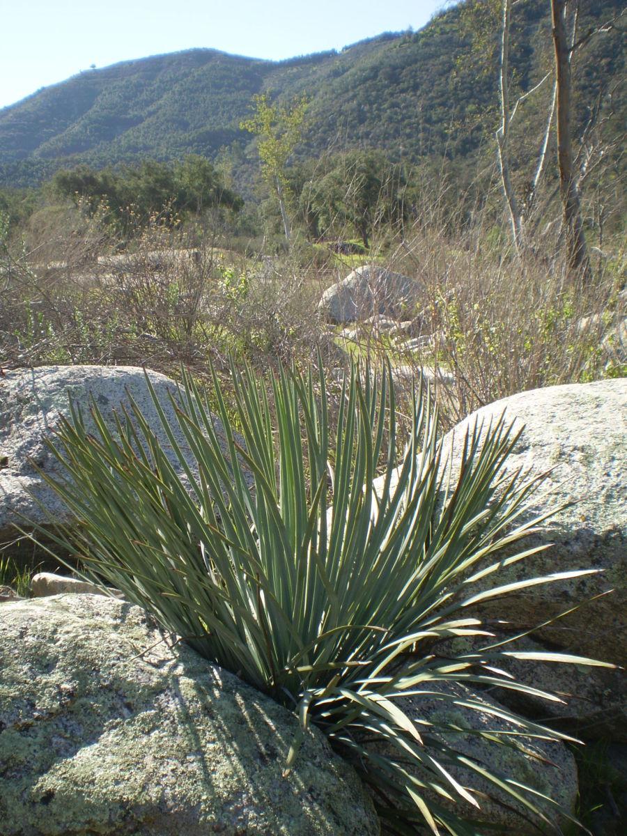 Wilderness Gardens Preserve near Pala, California.