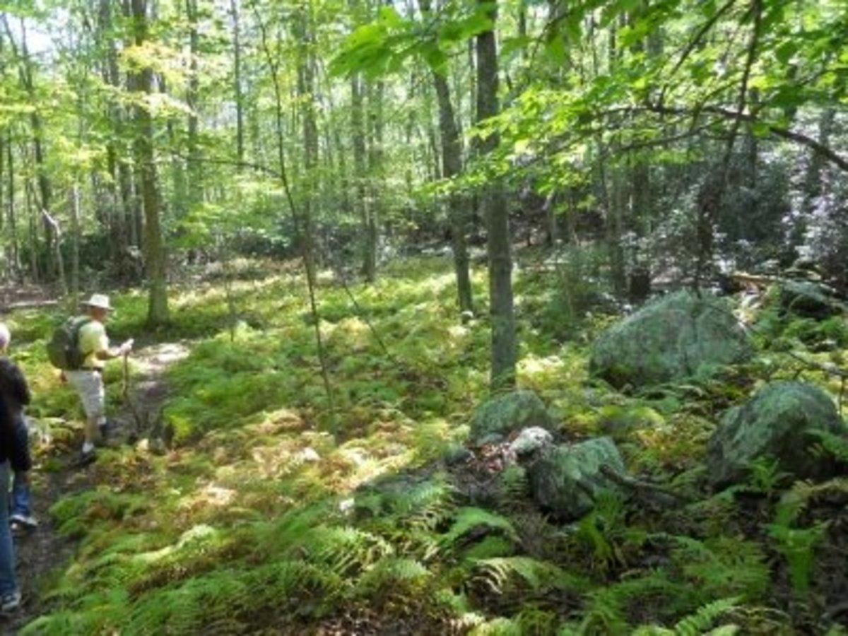 Path Through Gungywamp (left of photo)