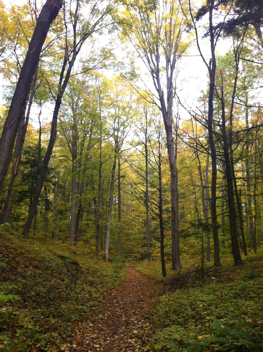 A peaceful forest in Ontario.