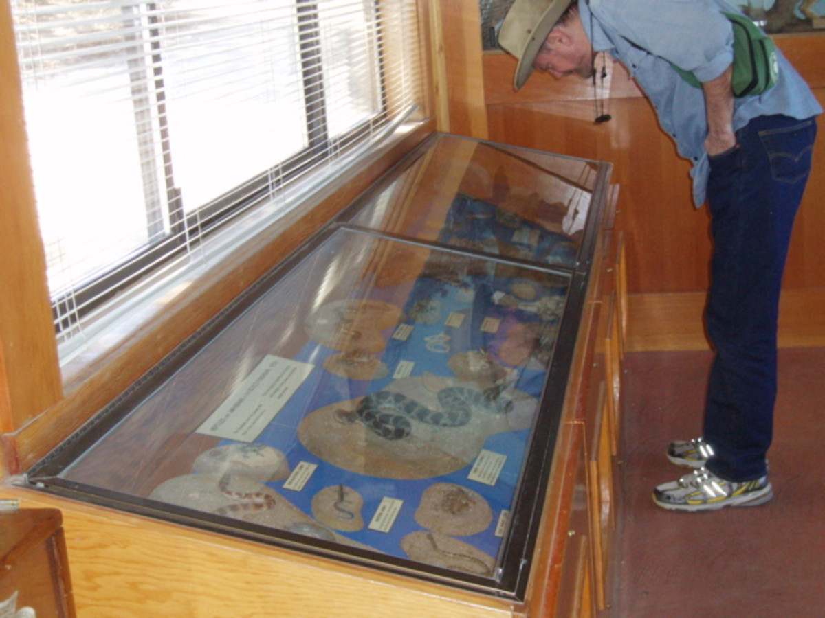 Display cases inside the Nature Center showing small animals, reptiles, birds, and live snakes.
