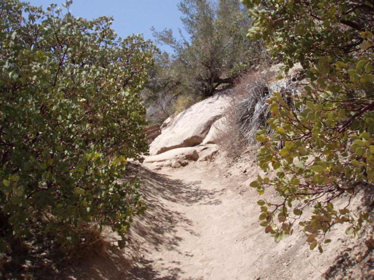 The trail in one of its easy stages.