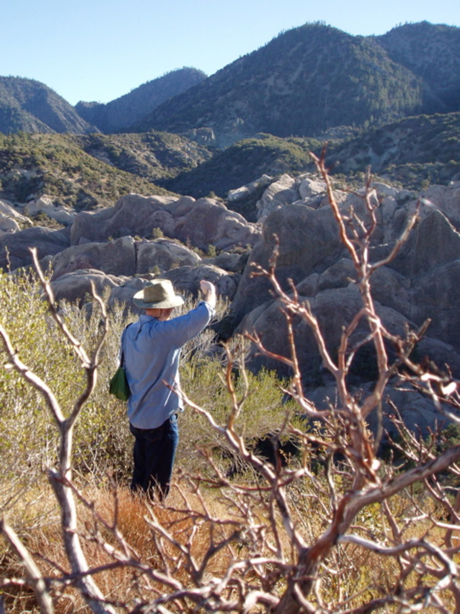 My friend's husband looking over the right side of the canyon from the upper trail, 300 ft. above the streambed. The rock climbers' cliff is on his left out of view.