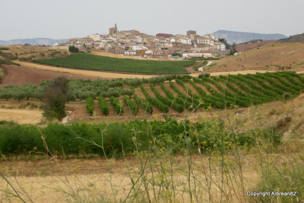 Ciraqui in the distance, surrounded by grape fields. We didn't stop there, but walked on to the next town. But somehow this place fascinated me.