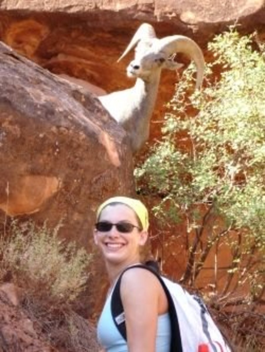 My niece (and a big horn sheep), summer hiking on the Bright Angel Trail