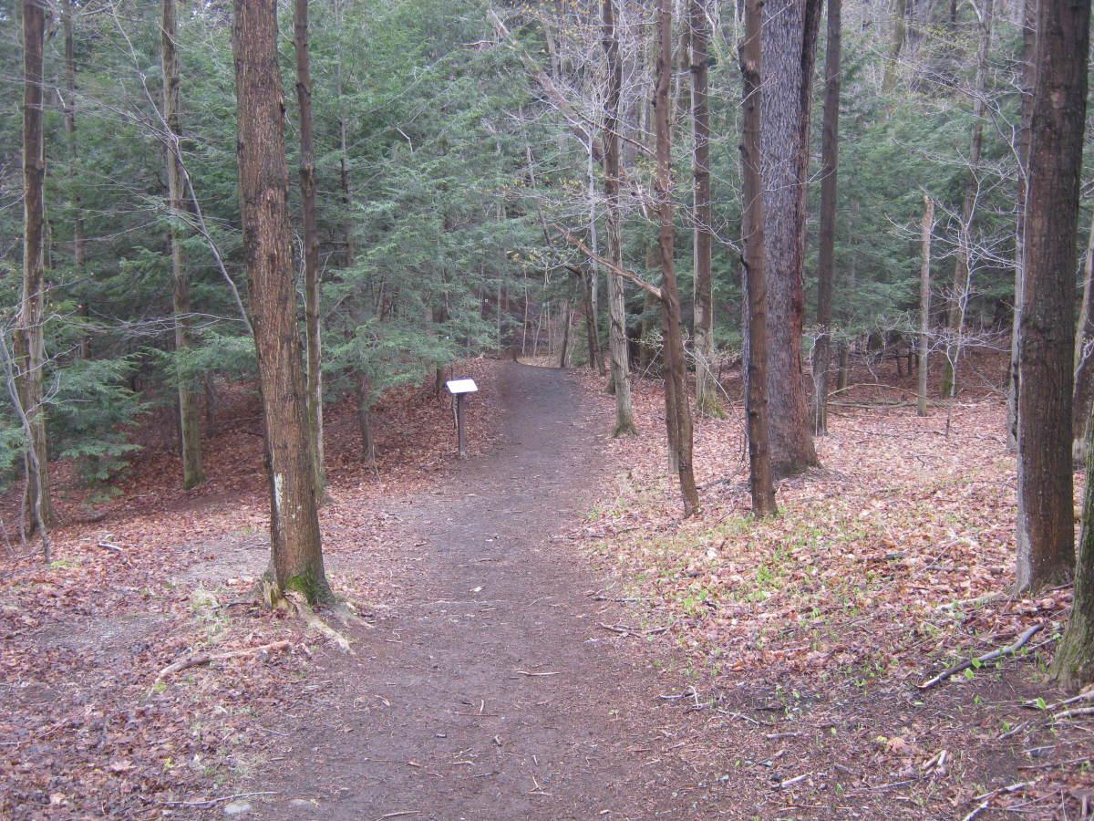 Gentle trails through hemlock groves.