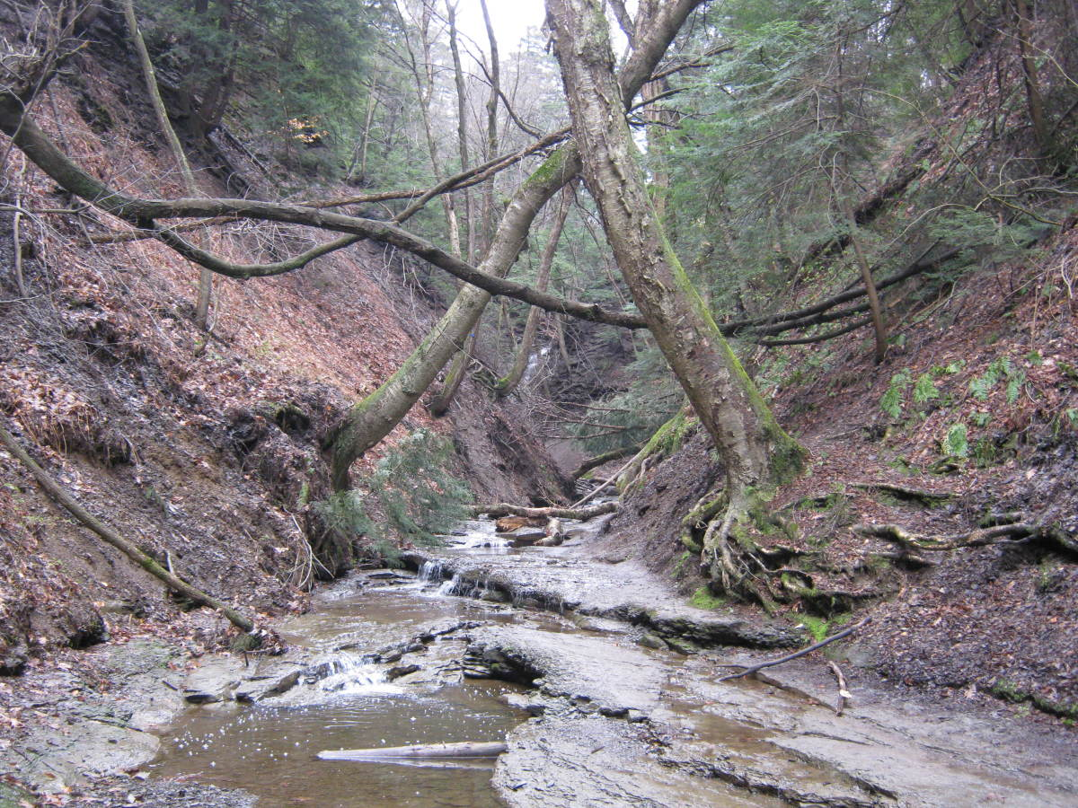 Looking down the Shale Creek Gorge.