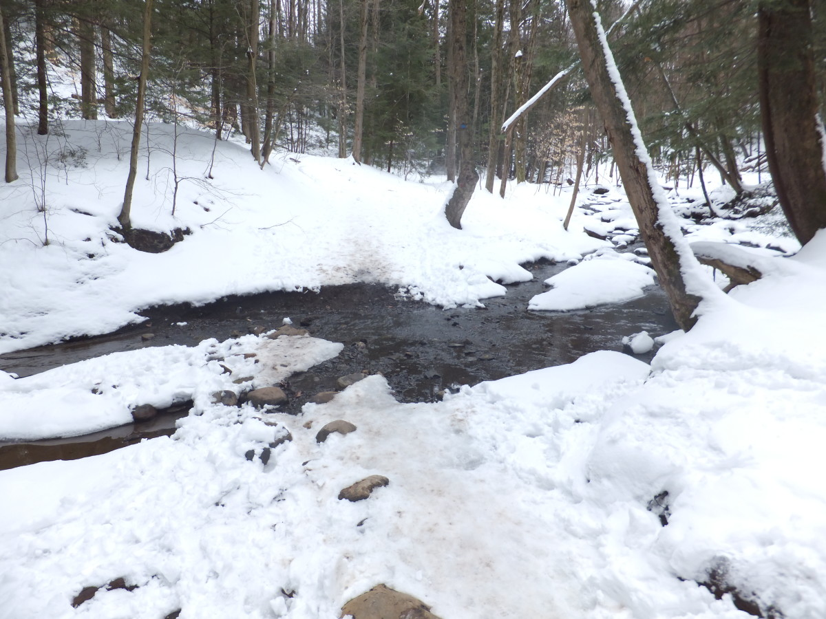 The trail crosses over Shale Creek at this spot.