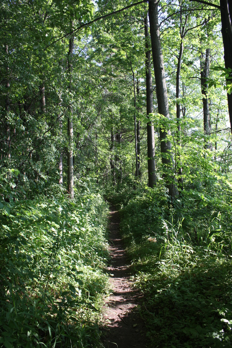 Self guided hiking trail, located on Hoople Island in The Parkway. The trail is well maintained by park staff and not too strenuous for the average hiker.