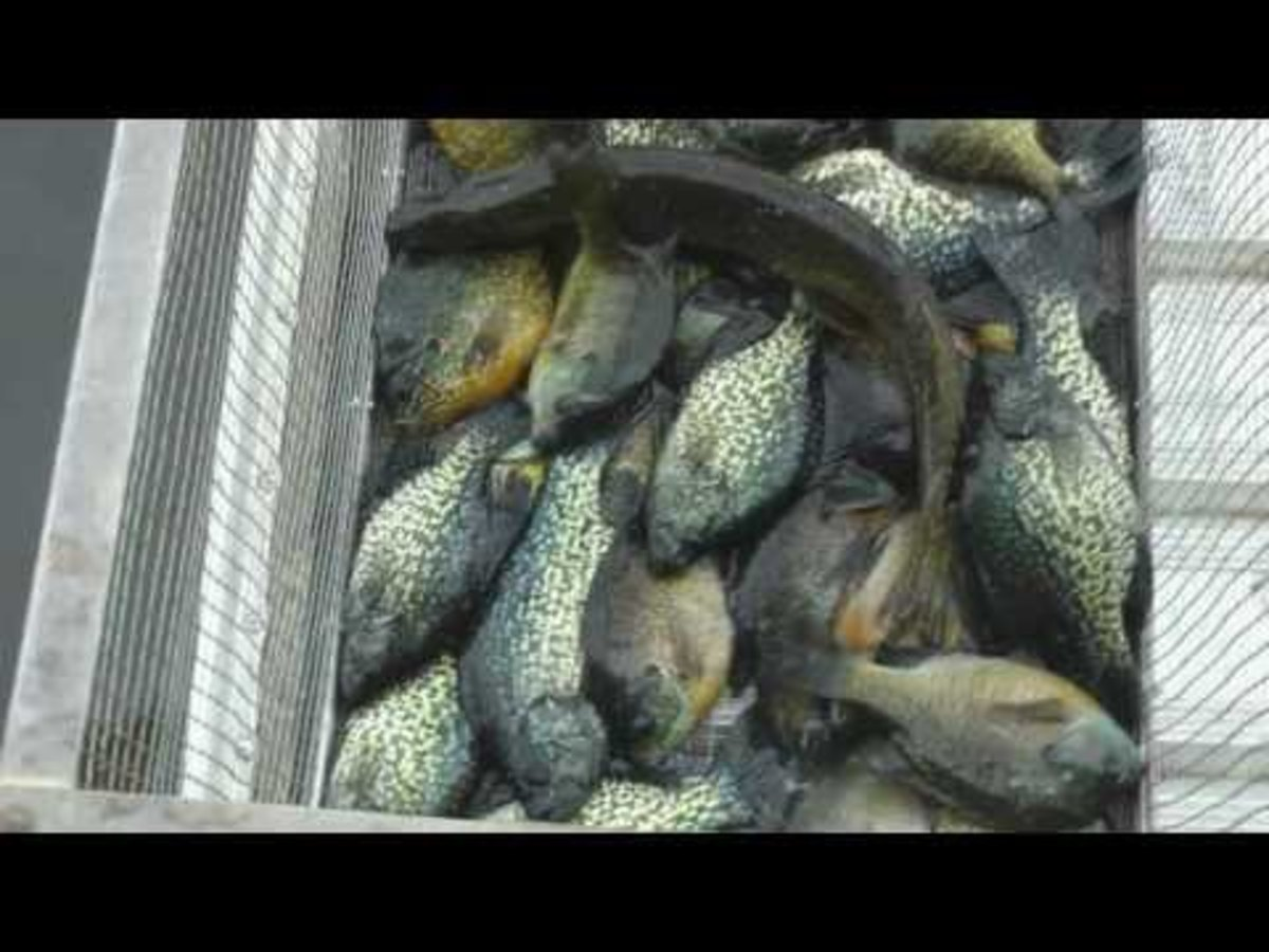 texas-crappie-fishing