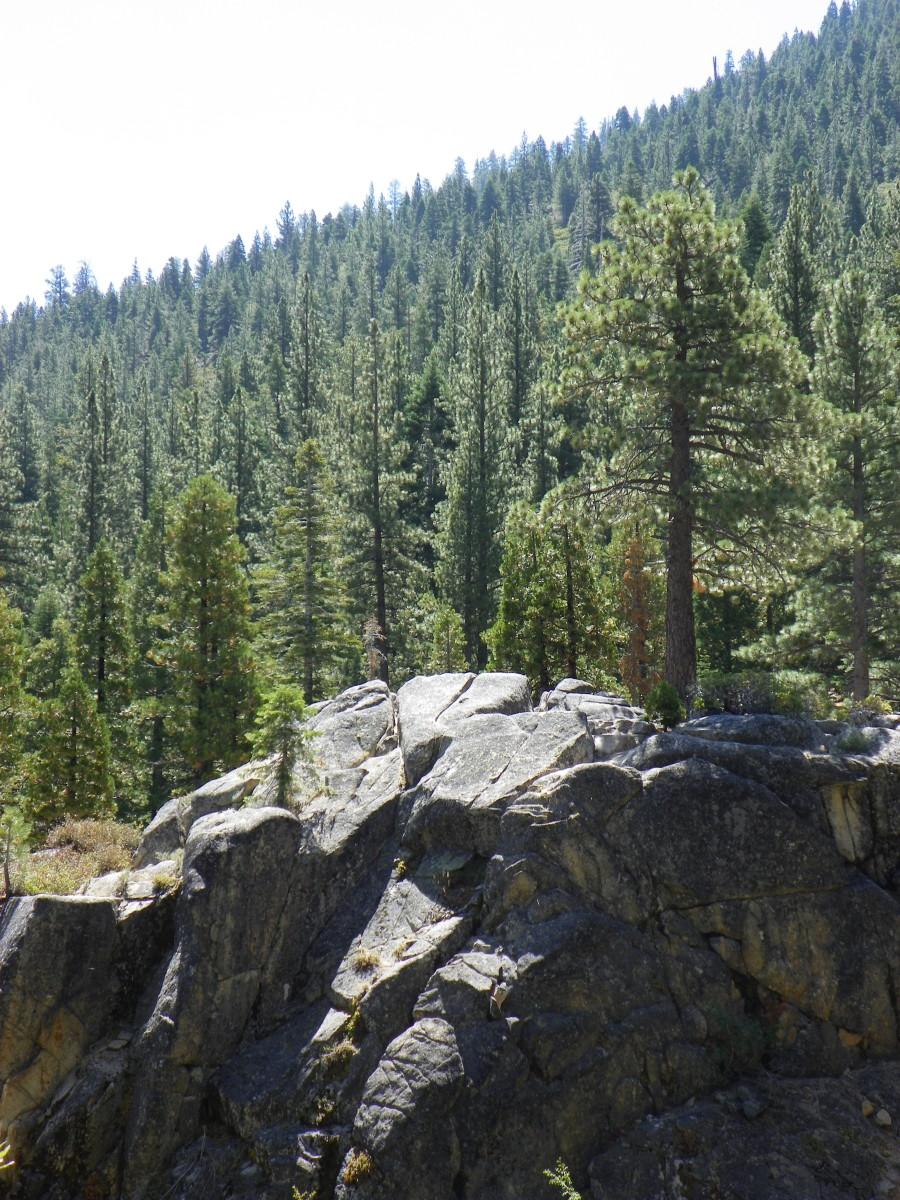 The forest ecology of the subalpine region is remarkable.