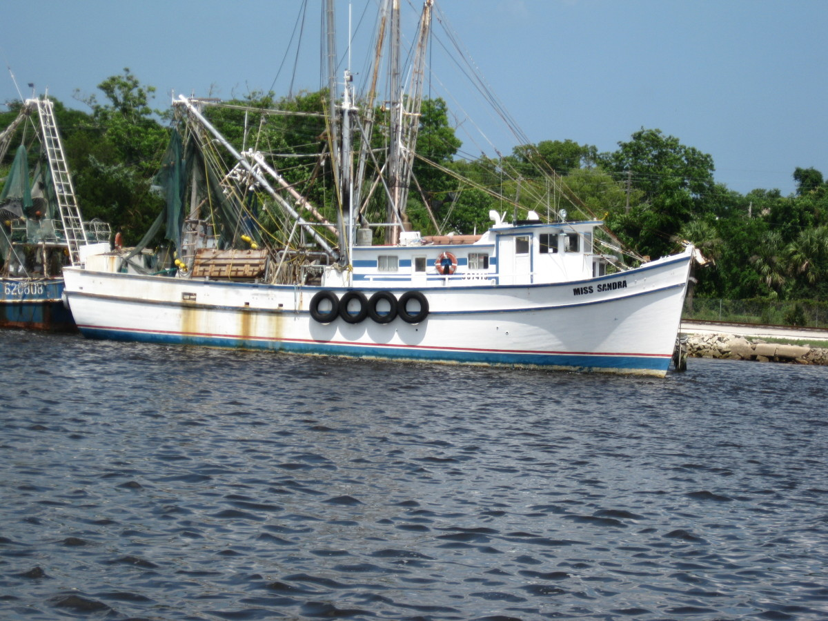 Find a shrimp boat like this one offshore 'culling' its catch and you will usually find tuna.