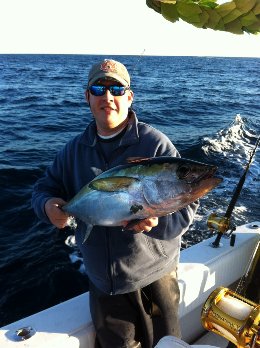 Blackfin Tuna are often caught while trolling for other species.