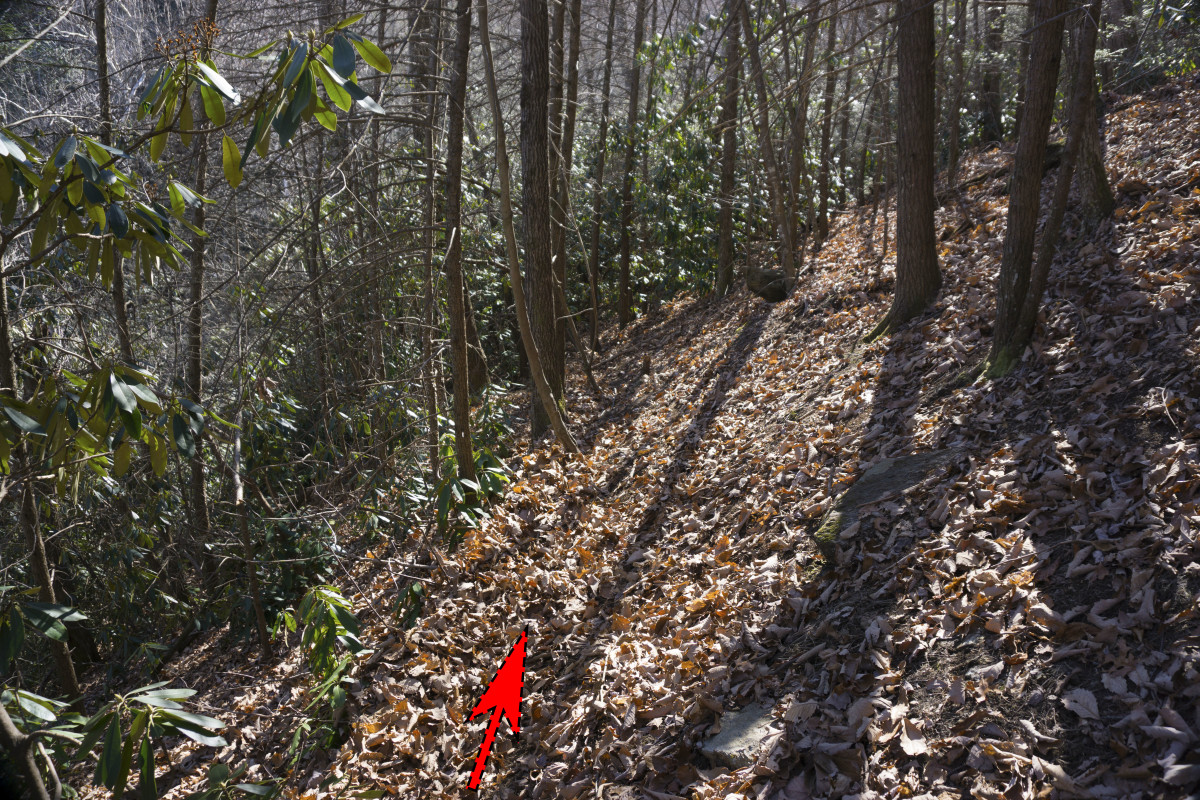The trail almost disappearing among the leaves.