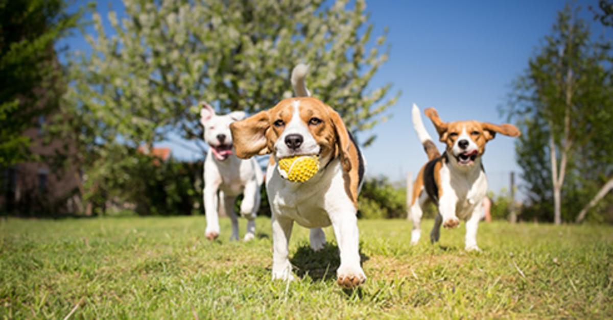 Three dogs frolicking at Bark Park.