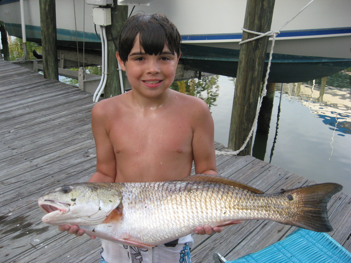A little angler with a big redfish!