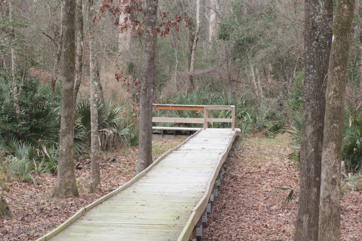 Palmetto Boardwalk - The long boardwalks reaching out into the thick woodlands and swamp areas.