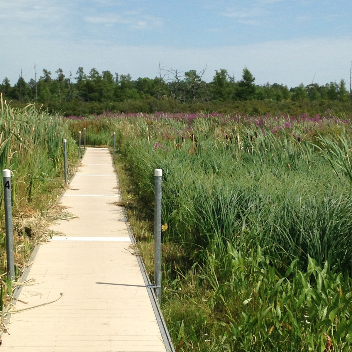 Boardwalk at Volo Bog