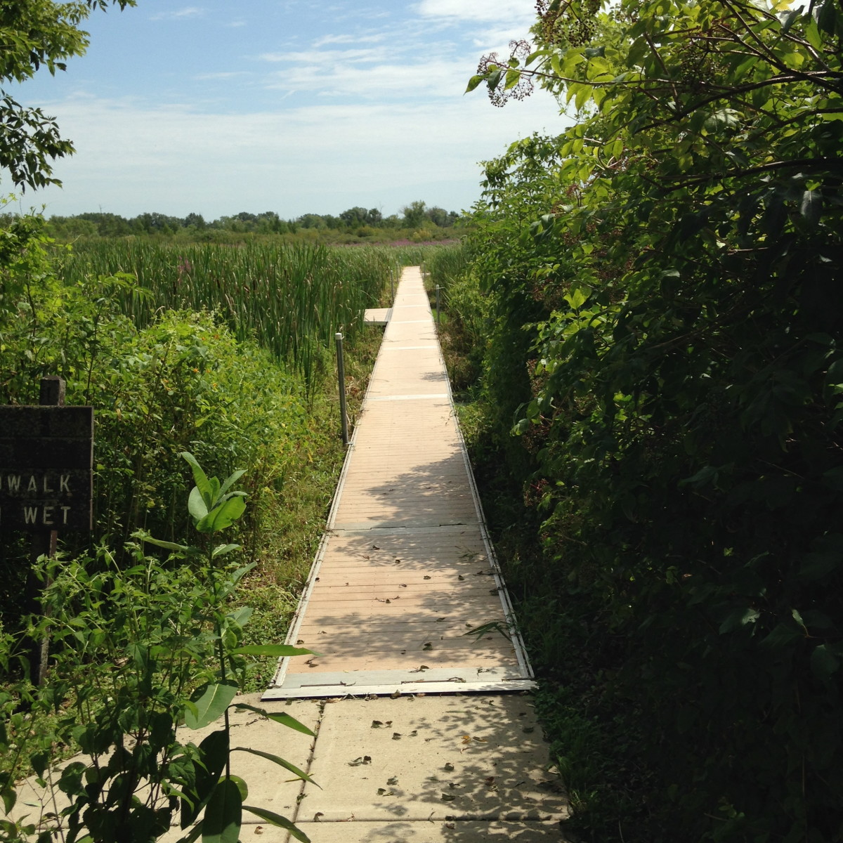 Floating walkway through Volo Bog
