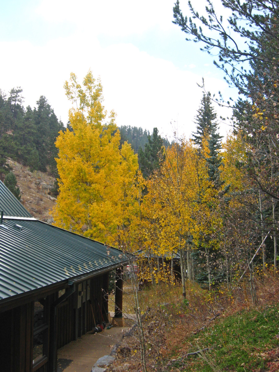 Golden aspen trees surround the Visitor's Center at Golden Gate Canyon State Park.
