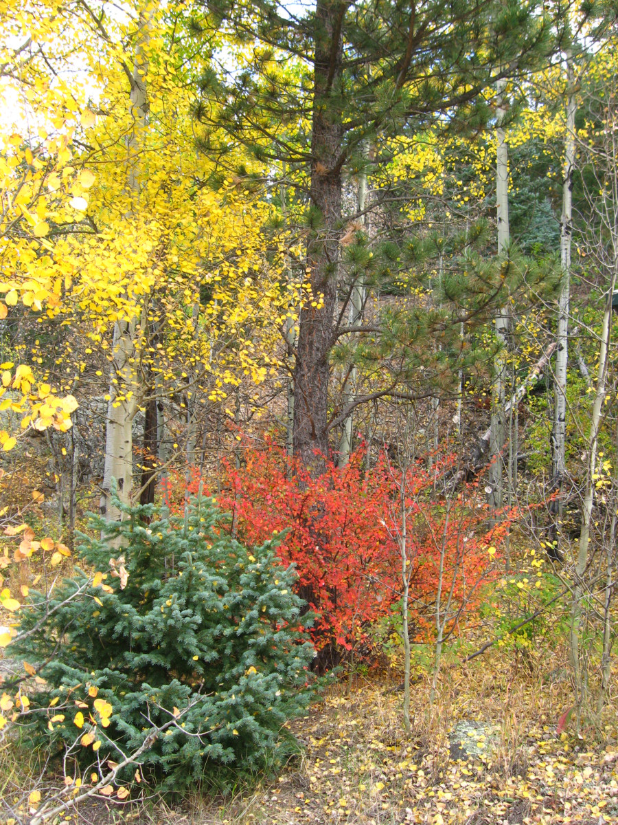 I love the green and yellow juxtaposed against the red in this fall color tableau. The plants are all just by the parking lot at the Visitor's Center.