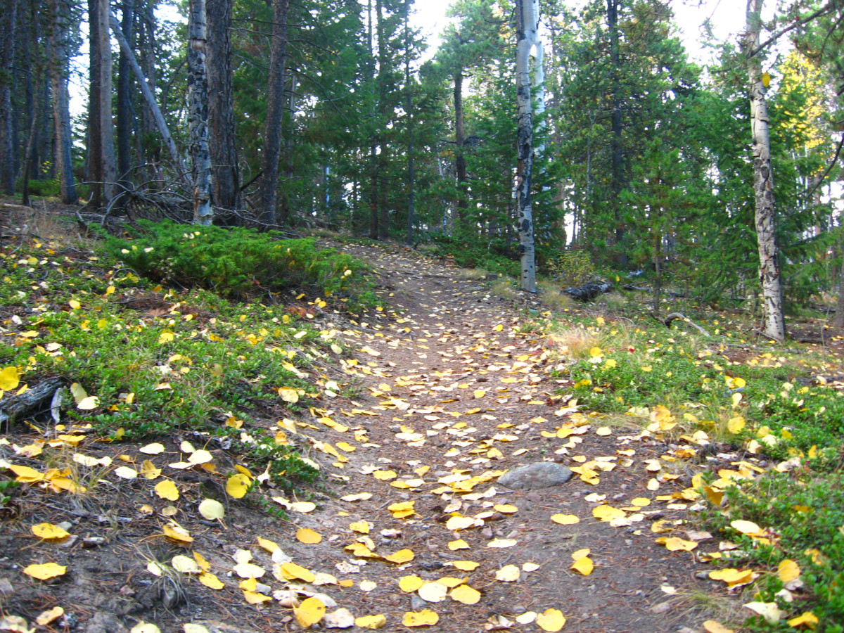 Golden aspen leaves and the forest...makes it easy to imagine a fairy path.