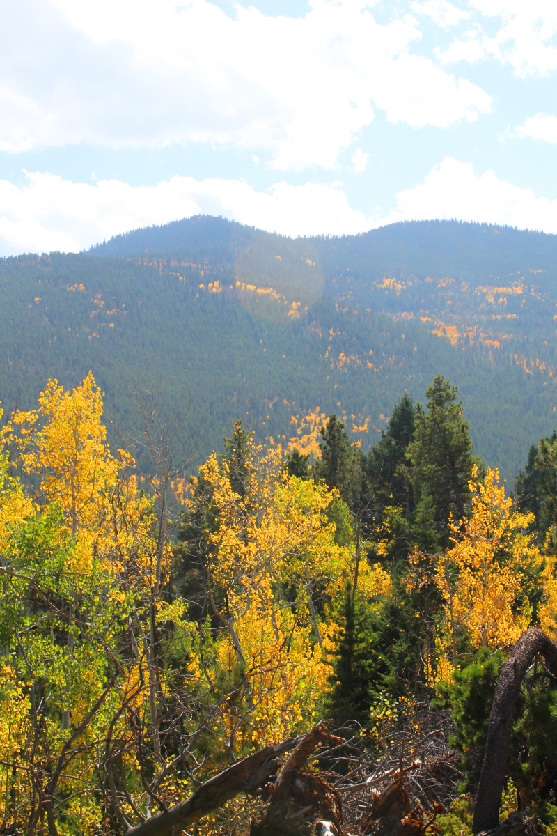 The golden aspen in the foreground play off the leaf color in the background.