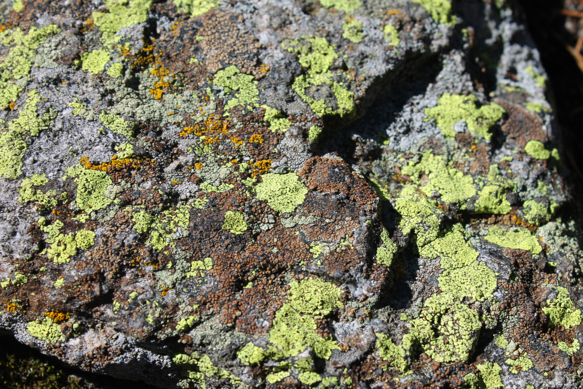 You can find many types of lichen growing on the rocks at Golden Gate State Canyon park.