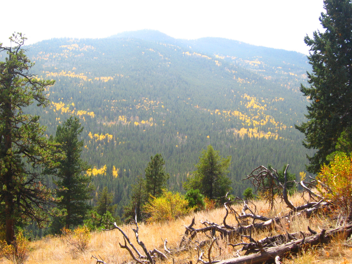 I loved the ways the aspen color seemed to waft down this hillside.