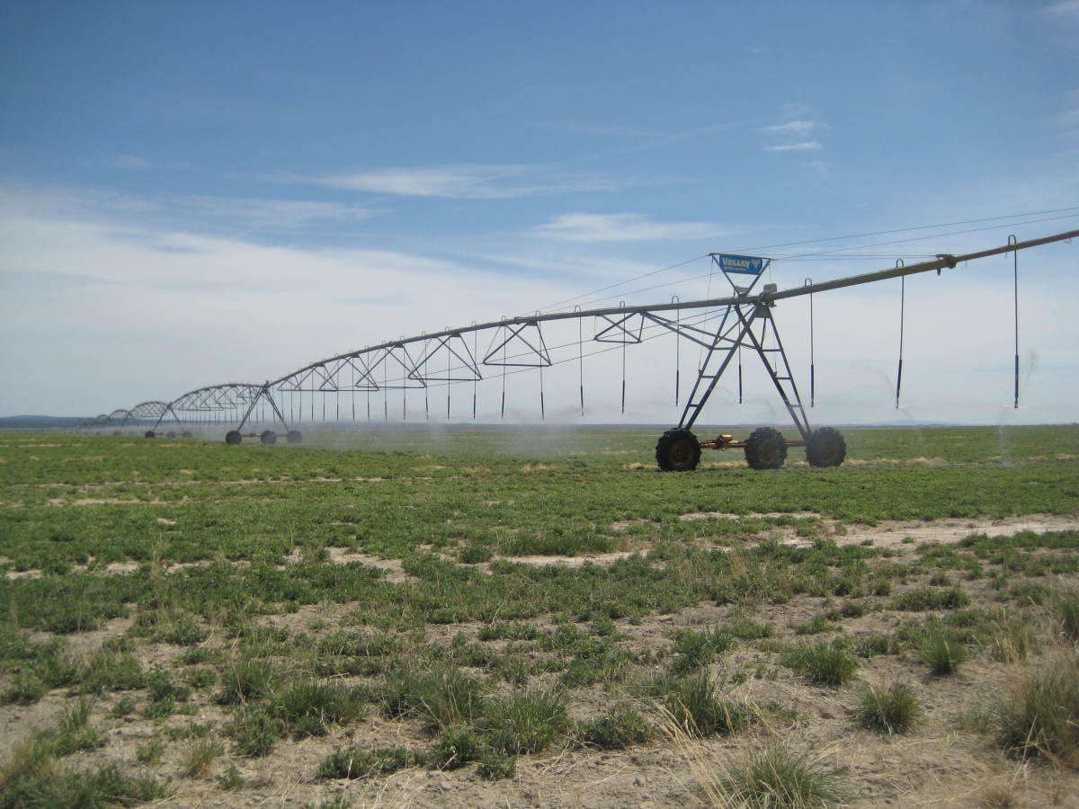 Pivot irrigation of an alfalfa field. Christmas Valley, OR.