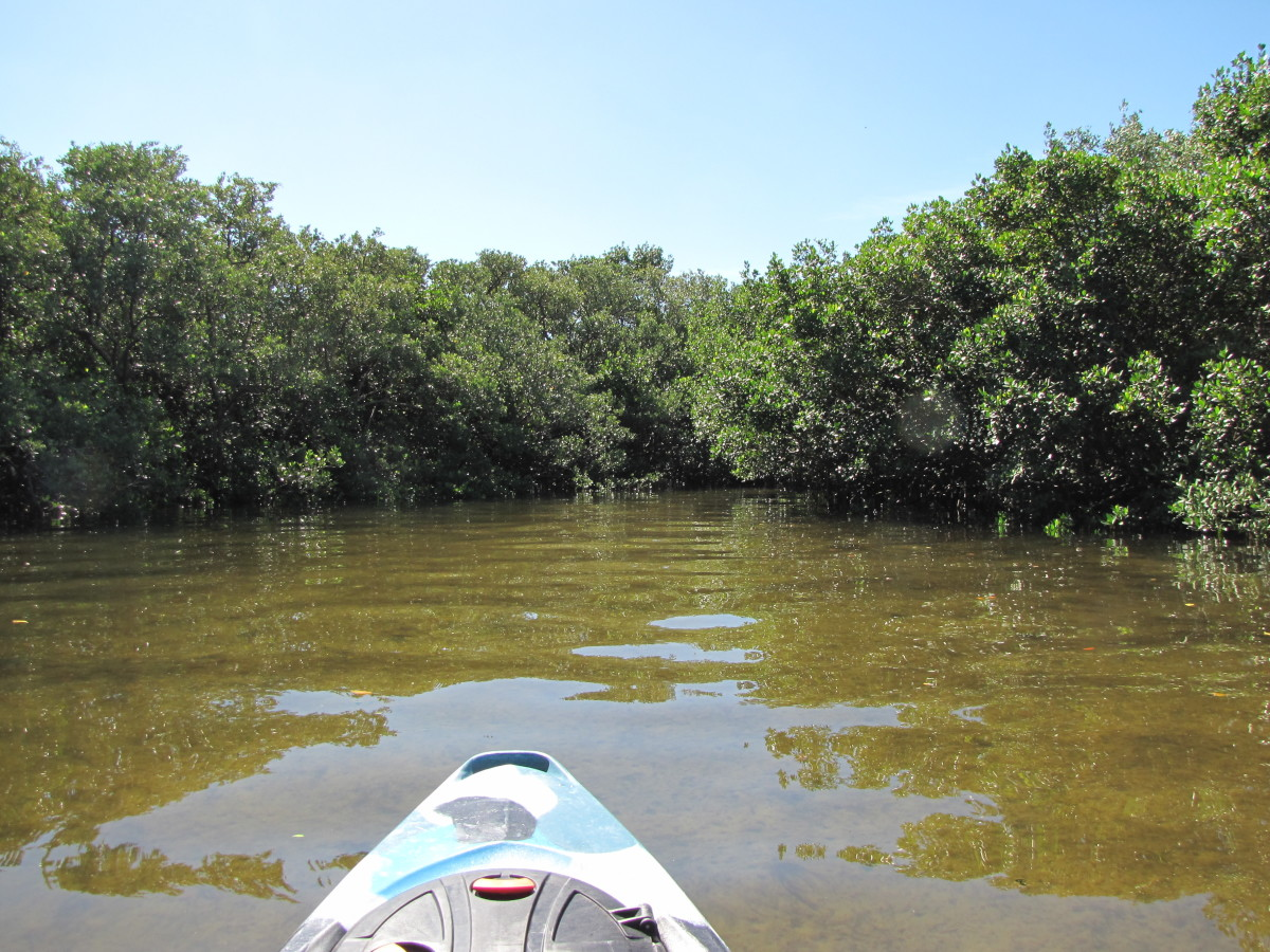 kayaking-the-anclote-river-park-holiday-florida