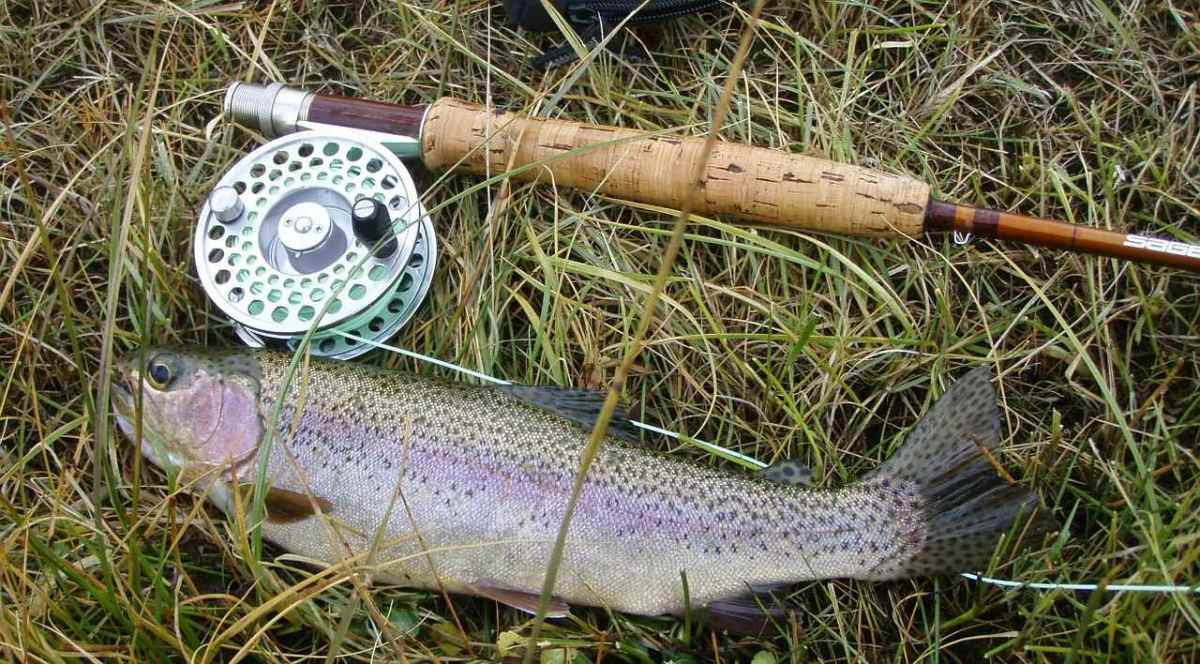 Nice Rainbow caught on the fly rod.