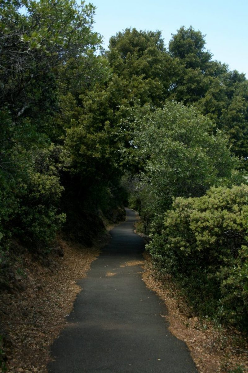 The Verna Dunshee trail is paved with asphalt, making it wheelchair accessible. It runs along cliffs in places, so beware of sheer drops.