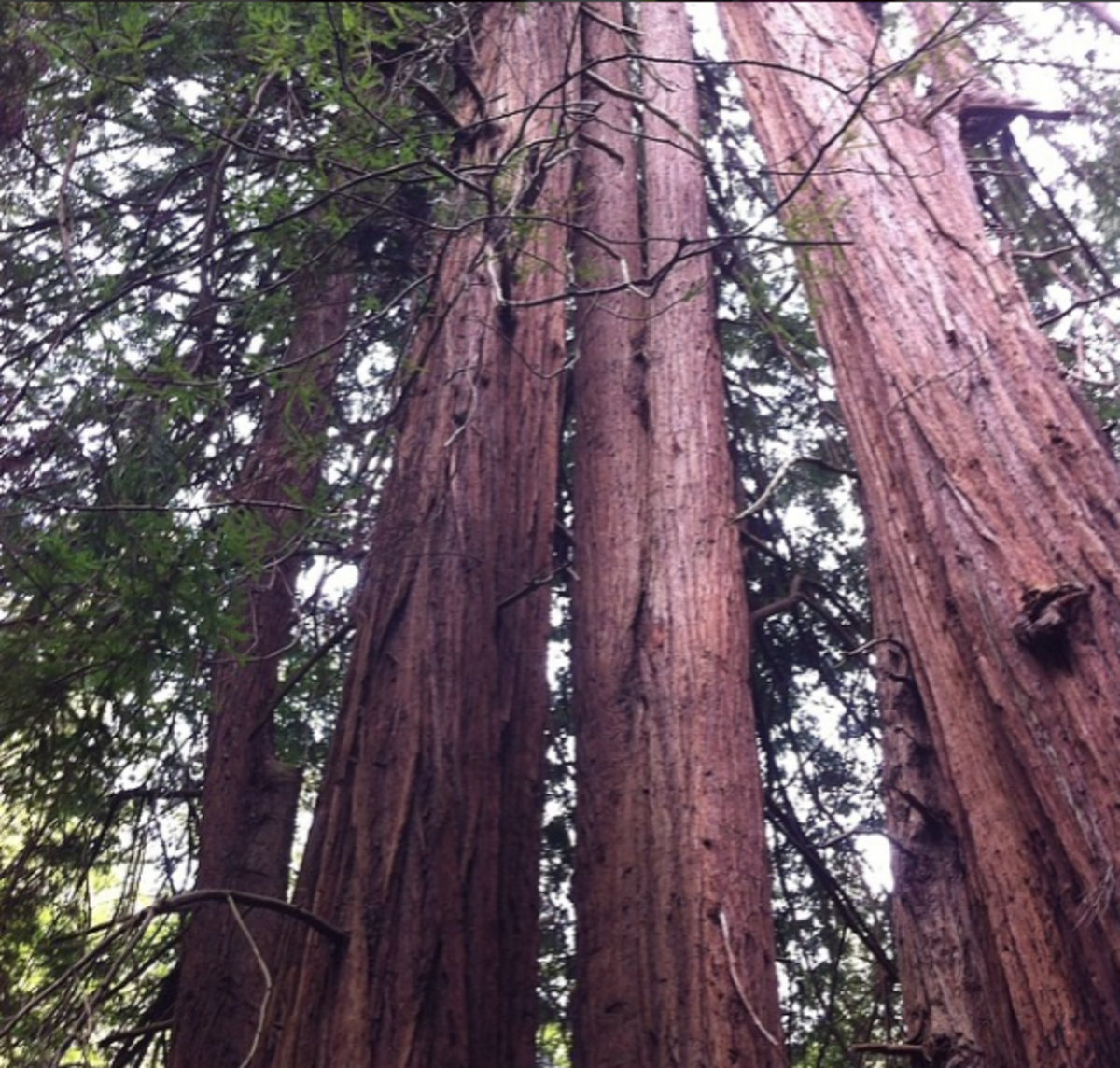 Wander through towering redwood trees at Muir Woods National Monument.