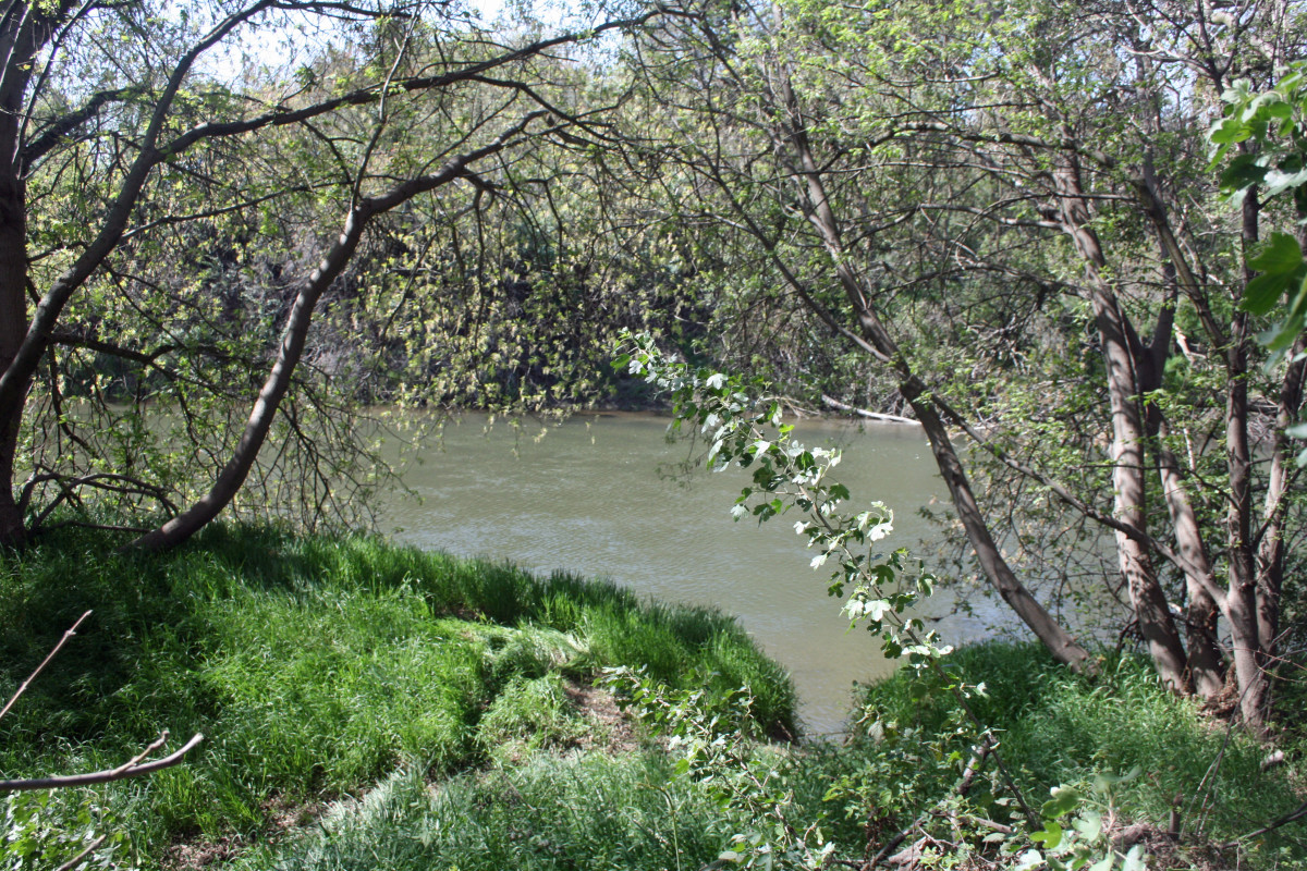 The Stanislaus River runs through Caswell Memorial State Park on the outskirts of Ripon.