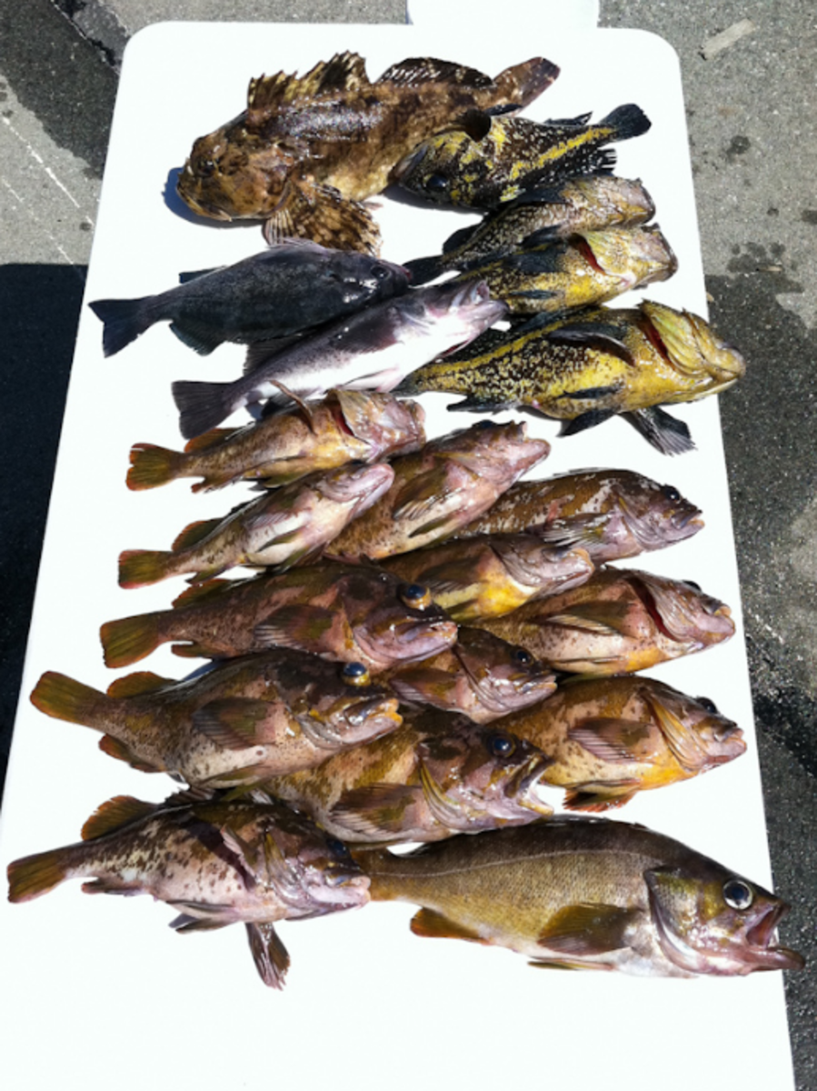 An awesome day of fishing with a variety of rockfish species including, Blue, Black, Brown, China, Copper, and even a bonus Cabezon!