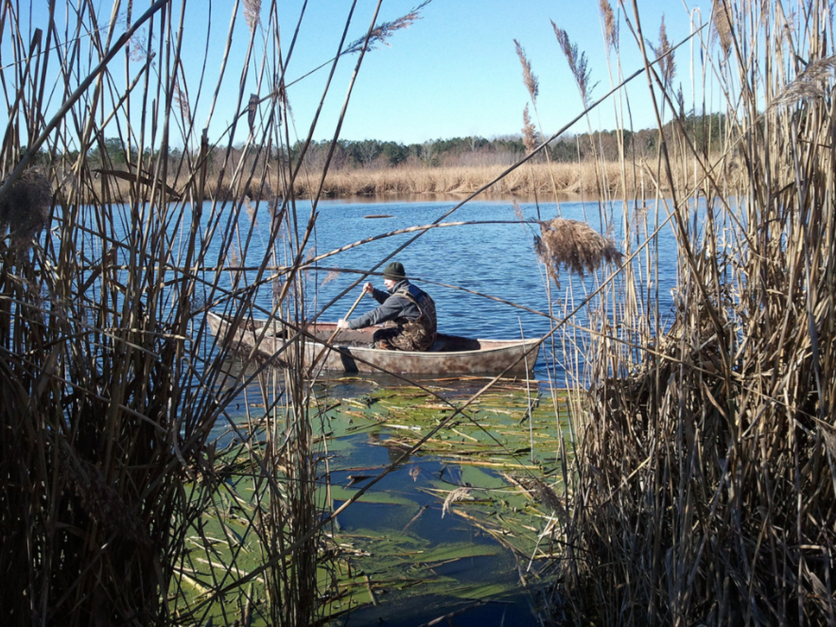Canoes, like this one here, provide many of the same benefits at kayaks for duck hunting, but lack some of the customization afforded from newer specialized duck hunting kayaks.