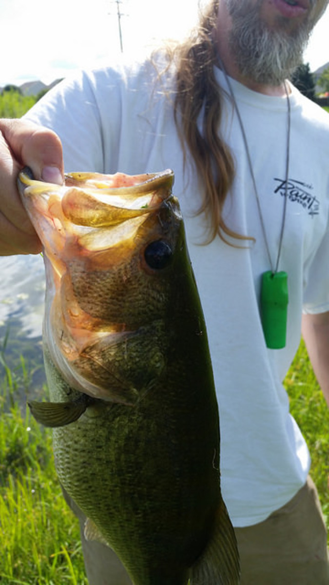 Big Ol' Bass caught on a power worm