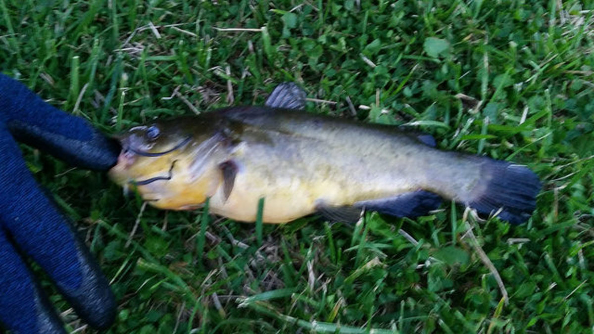 After 6 weeks of fishing in Pilcher Park, this is what Joe caught.
