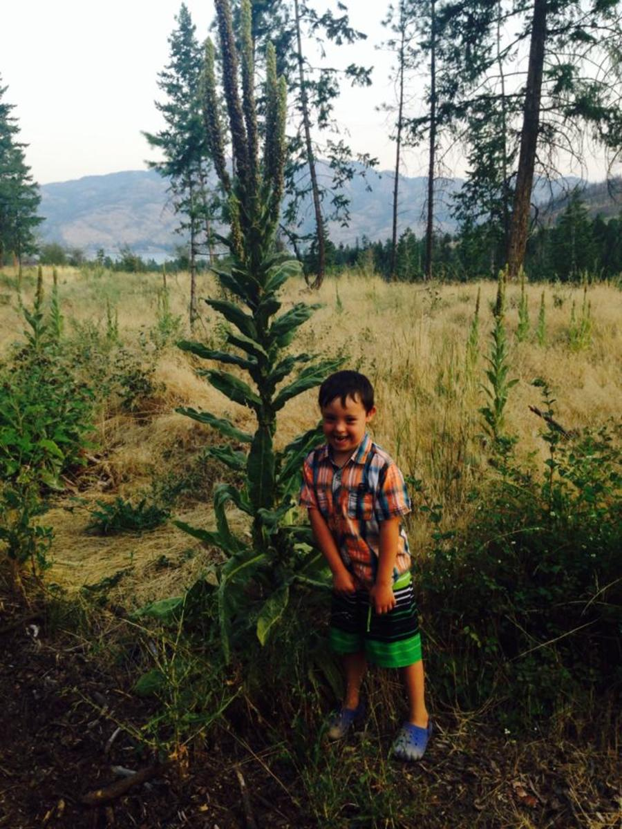 Jonah excited to take a picture with the mullein plant