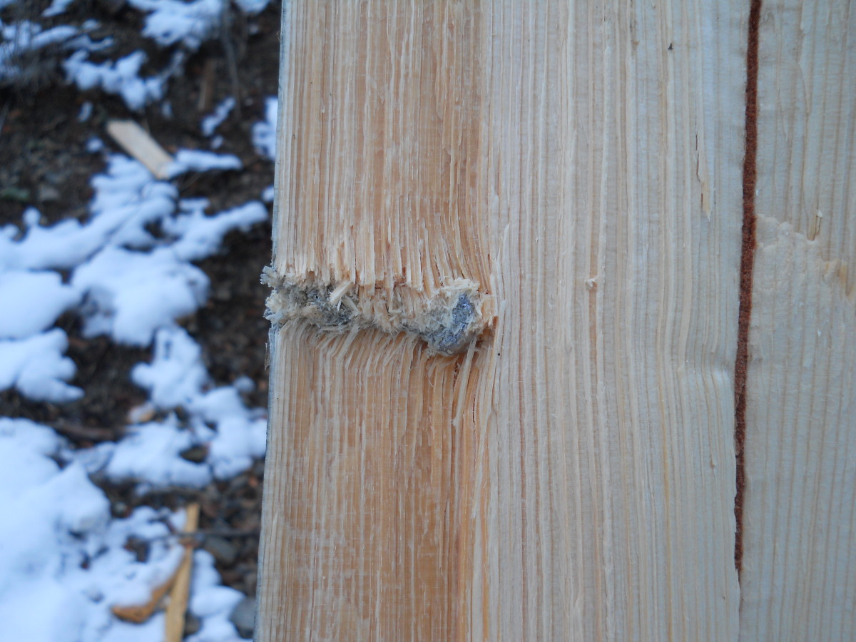 Sectioned backstop log.  Bullet shown where it came to rest.