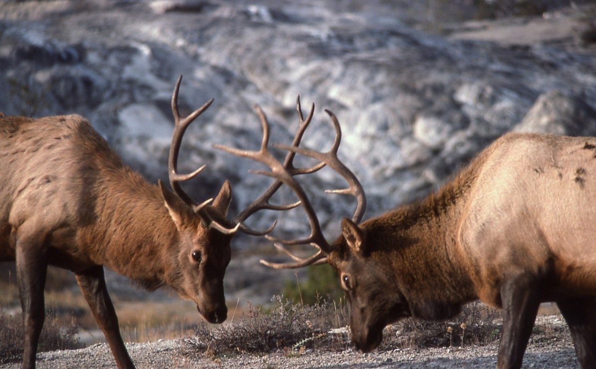 Best Rifles and Cartridges for Hunting in Colorado | SkyAboveUs