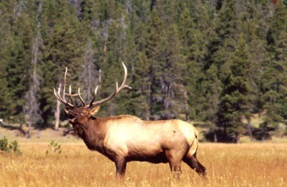 "Many experts recommend a minimum of 1500 ft-lbs impact energy for large game such as elk.  The ""Fast Thirties"" will deliver it to 650 yards, and beyond."