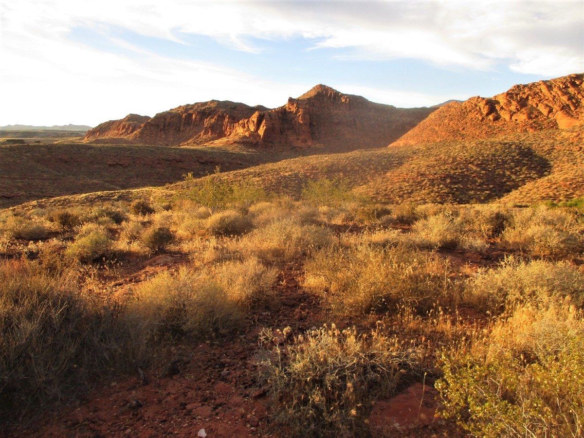 Many of the Saint George Hiking Trails will take you directly into The Red Cliffs Desert Reserve, which borders the northern edge of the city, photo by author