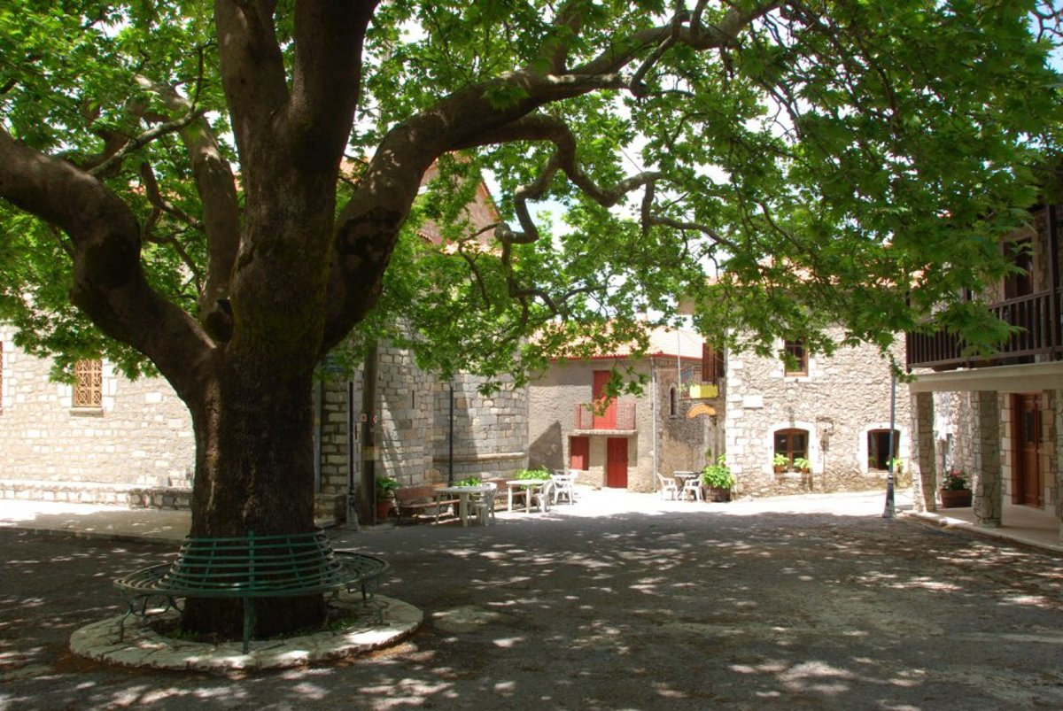 Zygovisti village square with a massive tree in the middle...no one outside...