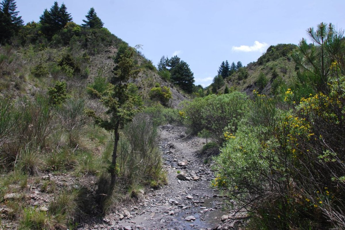 This is the first part of the trail from Zygovisti to Elati...