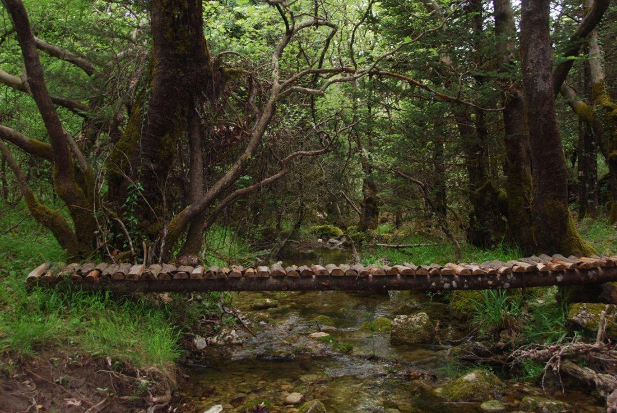 Beautiful log bridge over the limpid stream...
